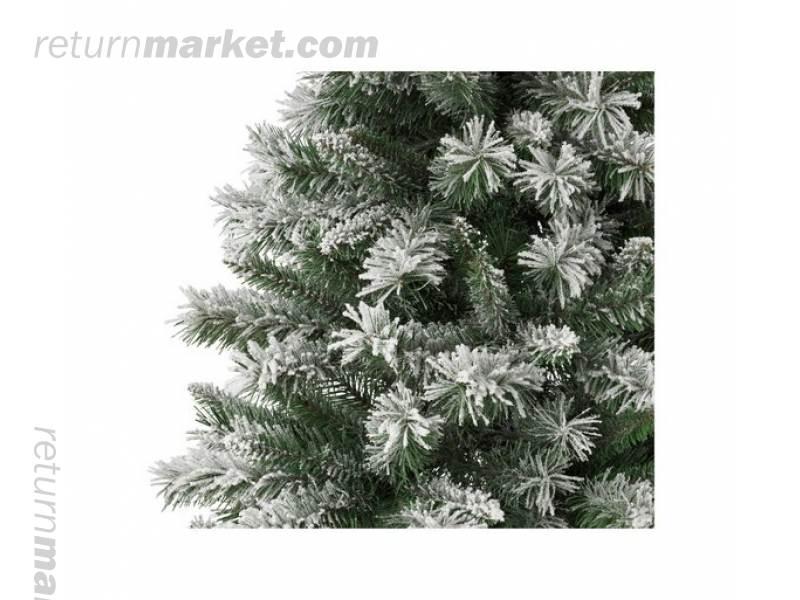 Christmas Trees! Sa21035